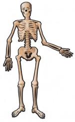 Dekoration skelet