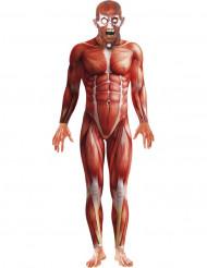 Udklædning menneskelig anatomi voksen