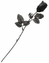 Sort rose