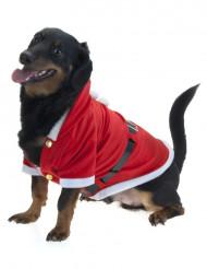 Julekappe hund