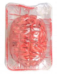 Hjerne blodig Halloween!
