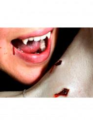 Sår fra dobbelt vampyrbid påføres med vand - Premium