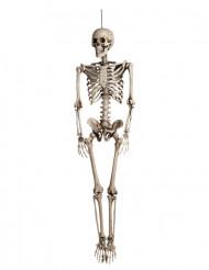 Knogleskelet - Halloweendekoration 160cm