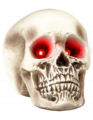 Kranier med oplyste øjne Halloween