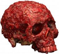 Blodigt Råddent Kranium