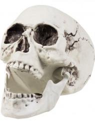 Dekoration skelet 24x18 cm Halloween