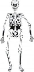 Skelet bevægeligt i pap Halloween 140 cm