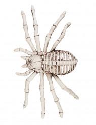 Dekoration skelet edderkop 12x24 cm Halloween