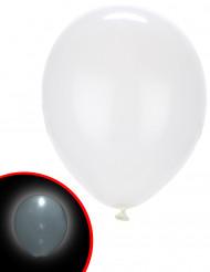 5 balloner LED hvide Illooms ®
