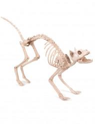 Katteskelet - Halloween pynt