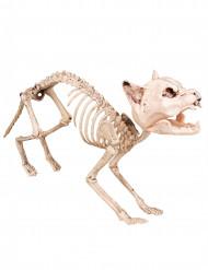 Dekoration katteskelet 60 cm Halloween