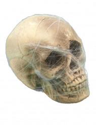 Dekoration kranie med edderkoppespind