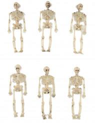 6 dekorations skeletter 15 cm