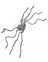 Grå behåret kæmpe edderkop