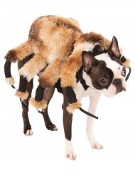 Kostume til hunde kæmpeedderkop