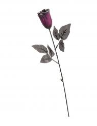 Rose sort og violet med glimmer