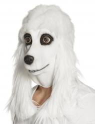 Latex maske puddel hvid voksen