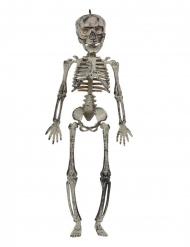 Hængende Skelet 30 cm