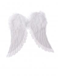 Engle vinger hvide 42 x 46 cm