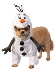 Olaf™ kostume til hund
