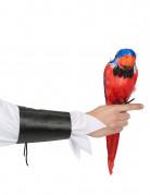 Tropisk papegøge