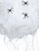 Hvidt Spindelvæv med 6 edderkopper