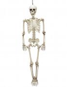 Skelet 90cm Halloween