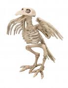 Dekoration skelet fra en ravn 19.5 cm